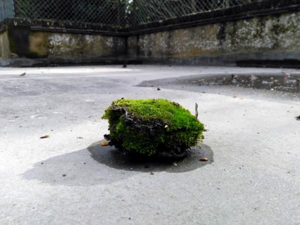 A lump of moss fallen onto a flat roof