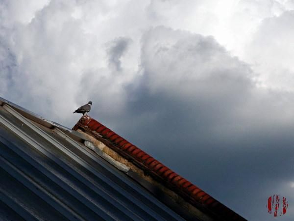 Photograph of a pigeon on the apex of the roof of the Drill Hall in Horsham with dramatic looking clouds from white to black in colour behind