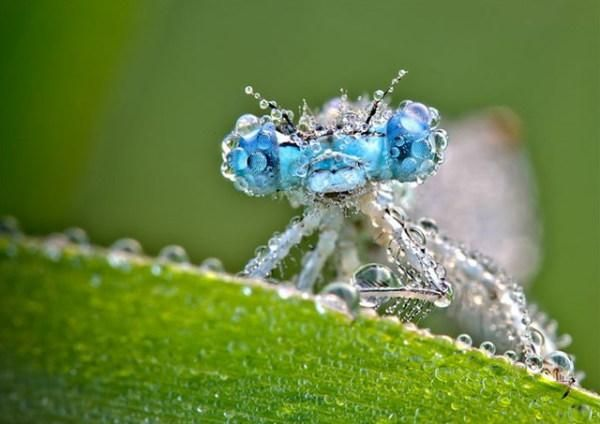 Photograph of an insect with dew settled on it's body and wings.